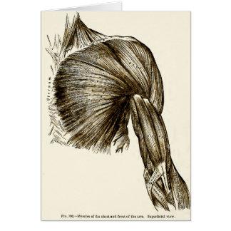 Cartão Músculos médicos da ilustração do vintage da caixa