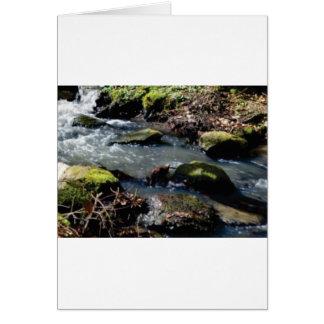 Cartão musgo em The Creek