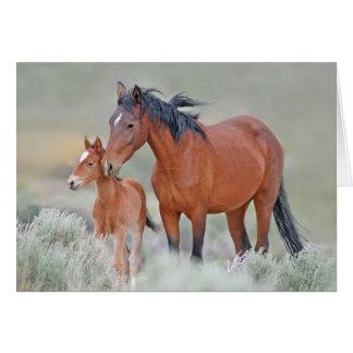 Cartão Mustang selvagens