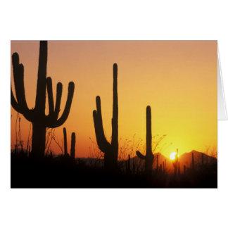 Cartão N.A., EUA, AZ, Saguaro NP, por do sol do Saguaro
