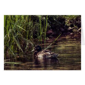Cartão Na borda da lagoa