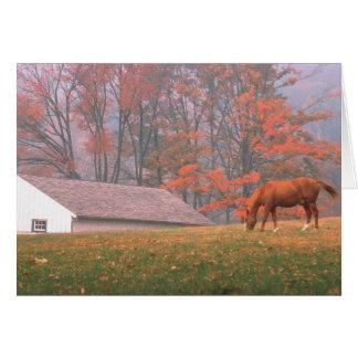 Cartão NA, EUA, PA, forja do vale. Cavalo que pasta em a