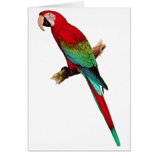Cartão Na sala de Tiki