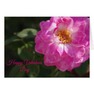 Cartão Namorados do rosa de chá cor-de-rosa