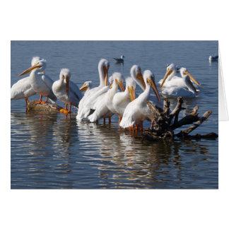 Cartão Napping 5X7 dos pelicanos