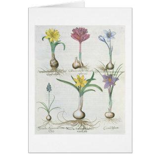 Cartão Narciso, açafrões e jacinto: autum 1.Narcissus