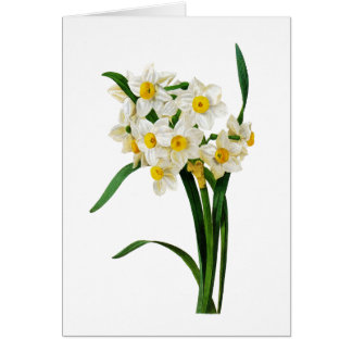 Cartão Narciso branco por Pierre-Joseph Redoute