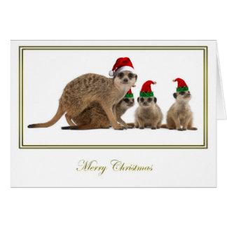 Cartão Natal 3 de Meerkat