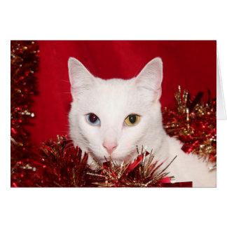 Cartão Natal branco do gato