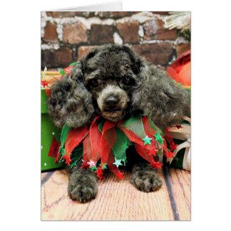 Cartão Natal - caniche de brinquedo - Annie
