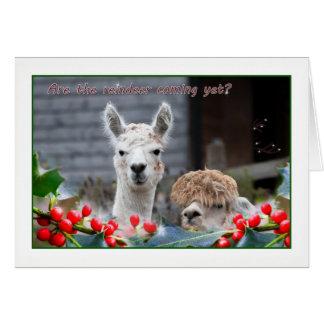 Cartão Natal da alpaca