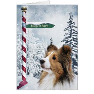 Cartão Natal de Sheltie