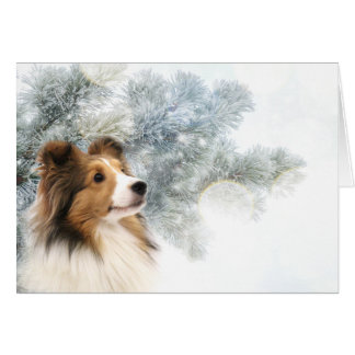 Cartão Natal de Sheltie do Sable