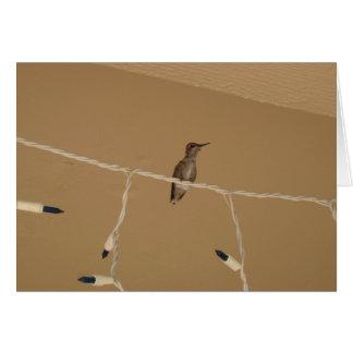 Cartão Natal do colibri