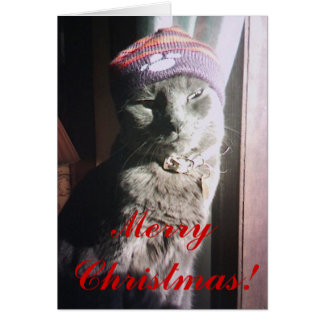 Cartão Natal do gatinho
