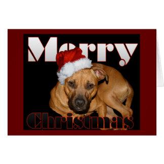 Cartão Natal feliz de Staffy