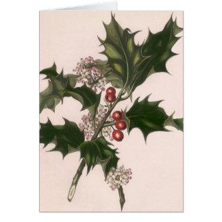 Cartão Natal vintage, planta do azevinho com bagas