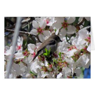 Cartão Néctar sorvendo do sunbird fêmea
