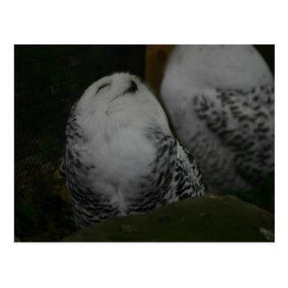 Cartão nevado da coruja