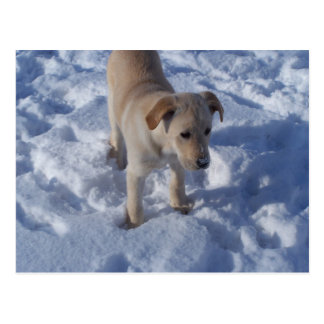 cartão nevado do filhote de cachorro