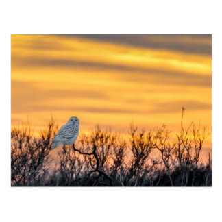 Cartão nevado do por do sol da coruja