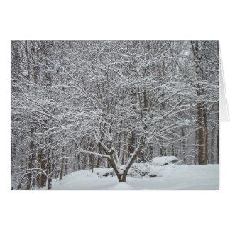 Cartão Neve em citações Denis Waitley da árvore de
