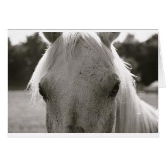 Cartão Nota do vazio do cavalo branco