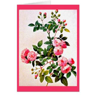 Cartão Notecard-Botanicals-Pierre Joseph Redoute 14