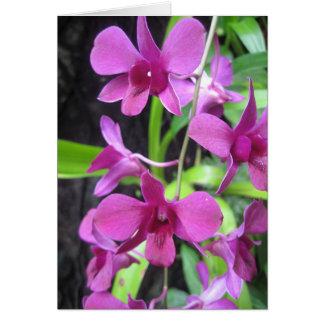 Cartão Notecard da orquídea
