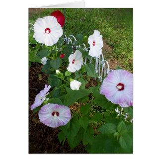 Cartão Notecard do hibiscus, variedade