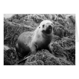 Cartão Notecard do leão de mar