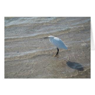 Cartão Notecard do pássaro de costa