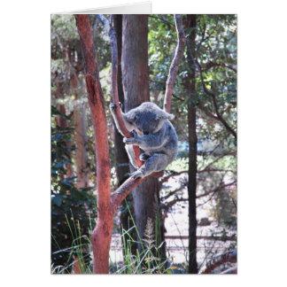 Cartão ~ Notecard do urso de Koala do sono