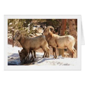 Cartão Notecard dos carneiros de Bighorn