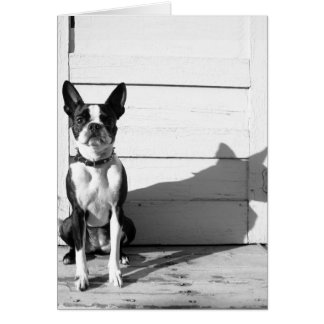 Cartão notecard vazio do cão