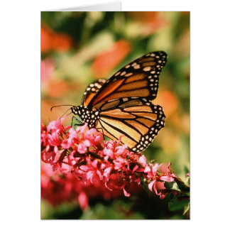 Cartão Notecards da borboleta de monarca