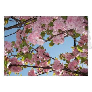 Cartão Notecards da flor de cerejeira
