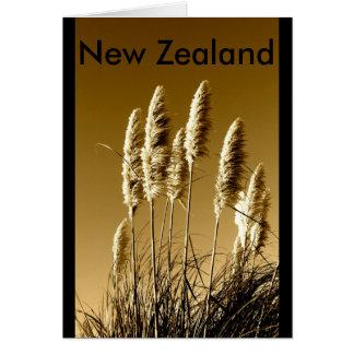 Cartão Nova Zelândia Toi Toi