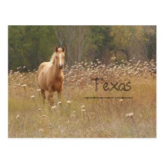 Cartão novo de Texas do cavalo do país