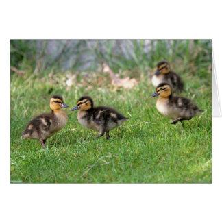 Cartão O bebê Ducks a foto