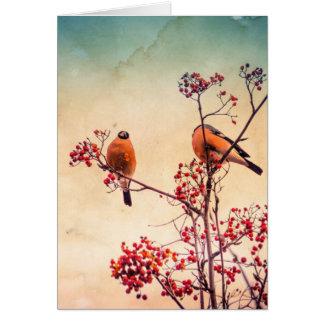 Cartão O Bullfinch em Rowan Textured 3