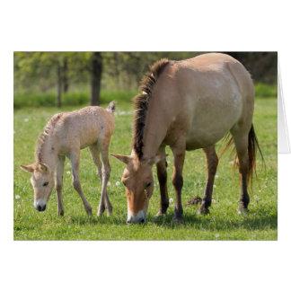 Cartão O cavalo e o potro de Przewalski que pastam