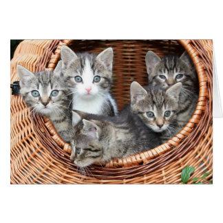 Cartão O cheio da cesta dos gatinhos dos bebês da pele