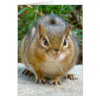 Cartão O Chipmunk bonito tem seu olho em você