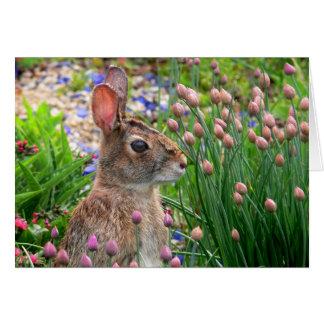 Cartão o coelhinho da Páscoa