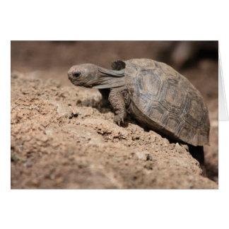 Cartão O desafio da tartaruga