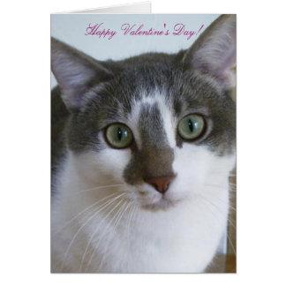 Cartão O dia considerável dos gato-Namorados cinzentos e