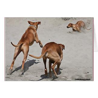 Cartão O divertimento de Ridgebacks na praia