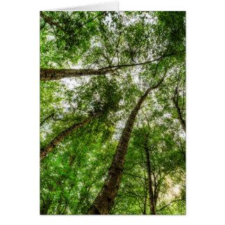 Cartão O dossel de árvore antigo