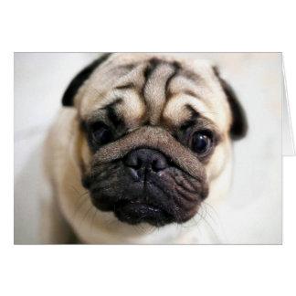 Cartão O filhote de cachorro adorável Eyes o Pug